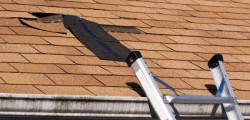 Dégradation de la toiture en bardeaux.